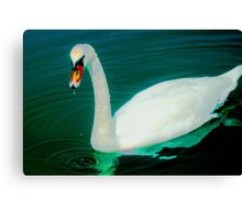 Swan on an aqua lake Canvas Print