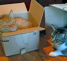 Cat and Kitten in a Box by Vivian Eagleson