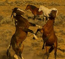 Fighting Wild Horses-Signed-2728 by JL Woody Wooden