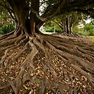 Roots by Andrew Cowell
