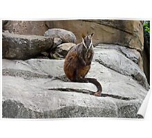 THE BRUSH TAILED ROCK WALLABY Poster