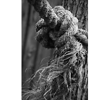 Knotty Picture Photographic Print