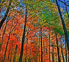 """"""" Camillus Forest - Upstate NY """" by DeucePhotog"""