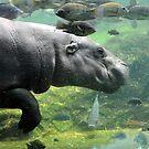 Pygmy Hippopotamus - Singapore by Ralph de Zilva