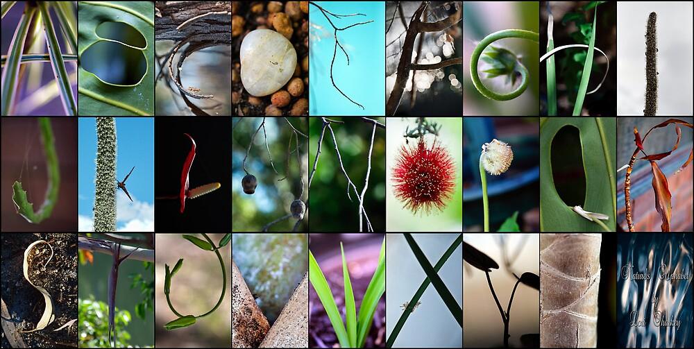 Nature's Alphabet by Ladyshark