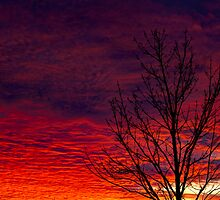 Fire in the Sky  by Jim Stiles
