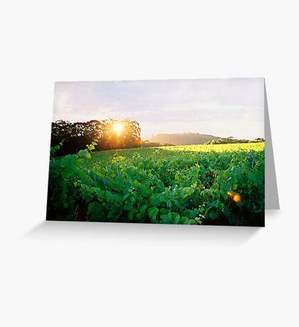 """""""Vineyard Sunset"""" Greeting Card"""