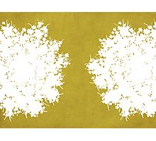 Queen Anne's Lace in Mustard & White Photographic Print