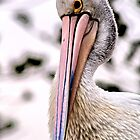 Pelican by Paul Sparrow