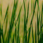 Grassie Reverie by sundawg7