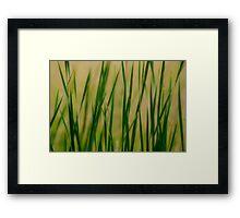 Grassie Reverie Framed Print