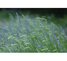 Lavender Mystique Photographic Print
