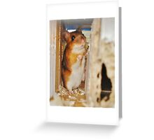 Portrait of a Wood Mouse Greeting Card
