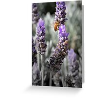 Busy Bee Collecting Pollen Greeting Card