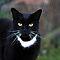 Pets in Black & White