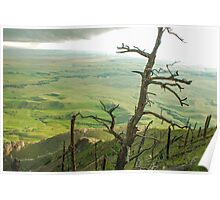 Stormy Tree Poster