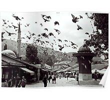 Pigeons, Sarajevo. Poster