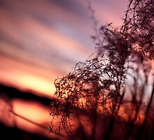 Cove Sunset pt2 by Matt  Grindle