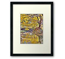 Autumn Tree And Creek Framed Print