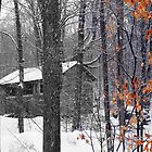 Fall Leaves in the Winter - Dunrobin Ontario by Debbie Pinard