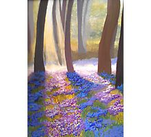 The Woodland's Magical Blossoms Photographic Print