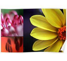 Flower palet Poster