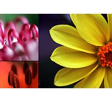 Flower palet Photographic Print