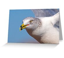 Seagull upclose and inflight Greeting Card