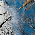 Tree Tops on the Wild Turkey Trail by Gary Chapple