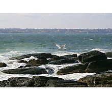 Seagull in Flight Photographic Print