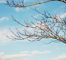 Sky & Tree by Beth Mackelden