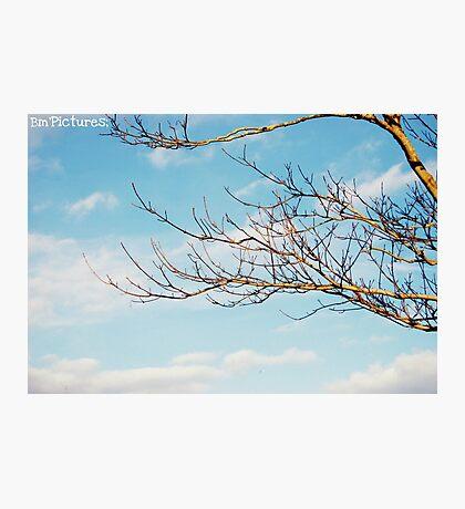 Sky & Tree Photographic Print