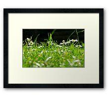 Daisy Dayz Framed Print