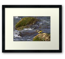 The Fly Fishing Master Framed Print