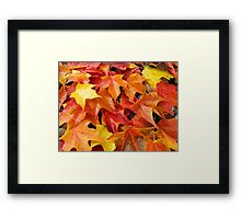 Fall Tree Leaves art prints Colorful Autumn Framed Print