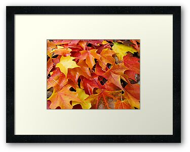 Fall Tree Leaves art prints Colorful Autumn by BasleeArtPrints