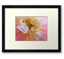Dahlia Floral art prints Pink White Dahlias Framed Print
