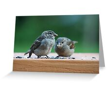 Two baby sparrows Greeting Card