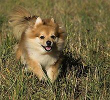 Small dog close by Susanna Hietanen