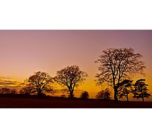 Bare Trees Photographic Print