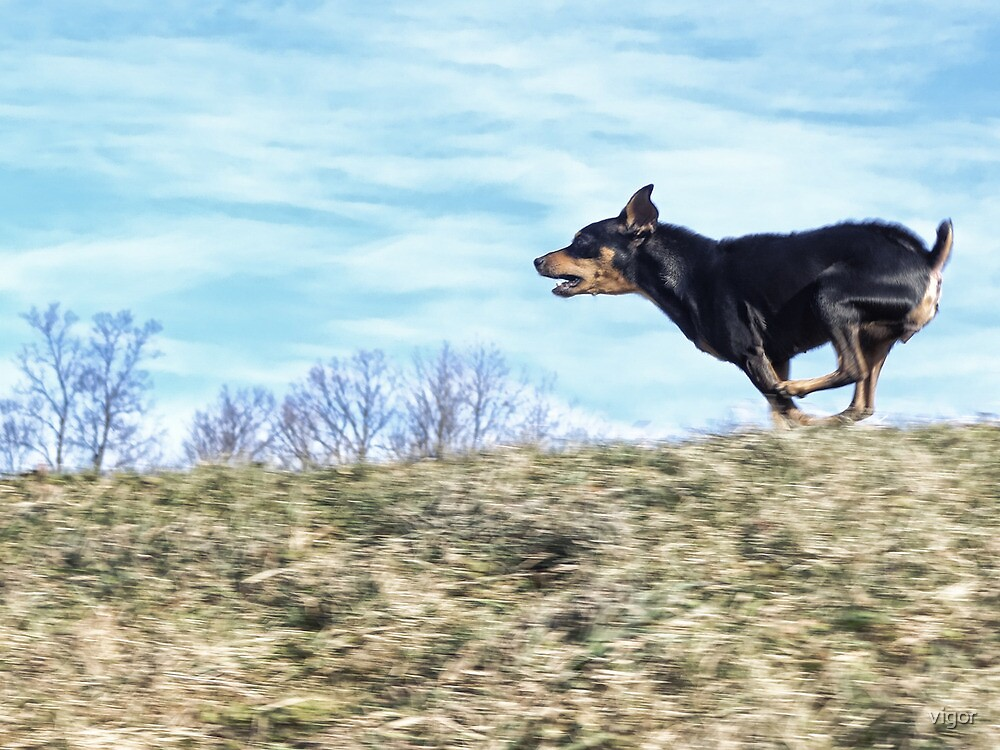 Run, Toto Run! by vigor