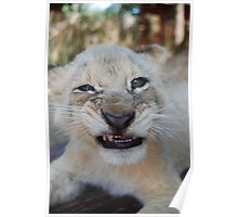 Lion cub meaning business Poster