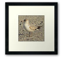 Avian Profile ~ Part Seven Framed Print