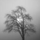 Tree Silhouette iPhone Case by Jan Vinclair