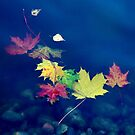 Autumn leaves by Bluesrose