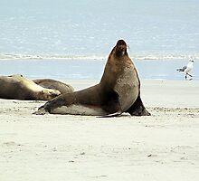 Sea Lion by Brndimage