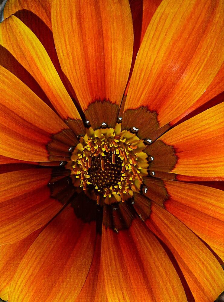 Orange flower by Kate Fortune