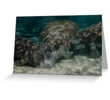 Maternal Manatee Greeting Card