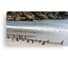 penquins on Mount Maunganui beach from Rena recovery Canvas Print