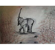 The Lucky Elephant Photographic Print